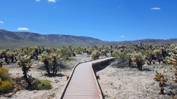 Cholla Cactus trail