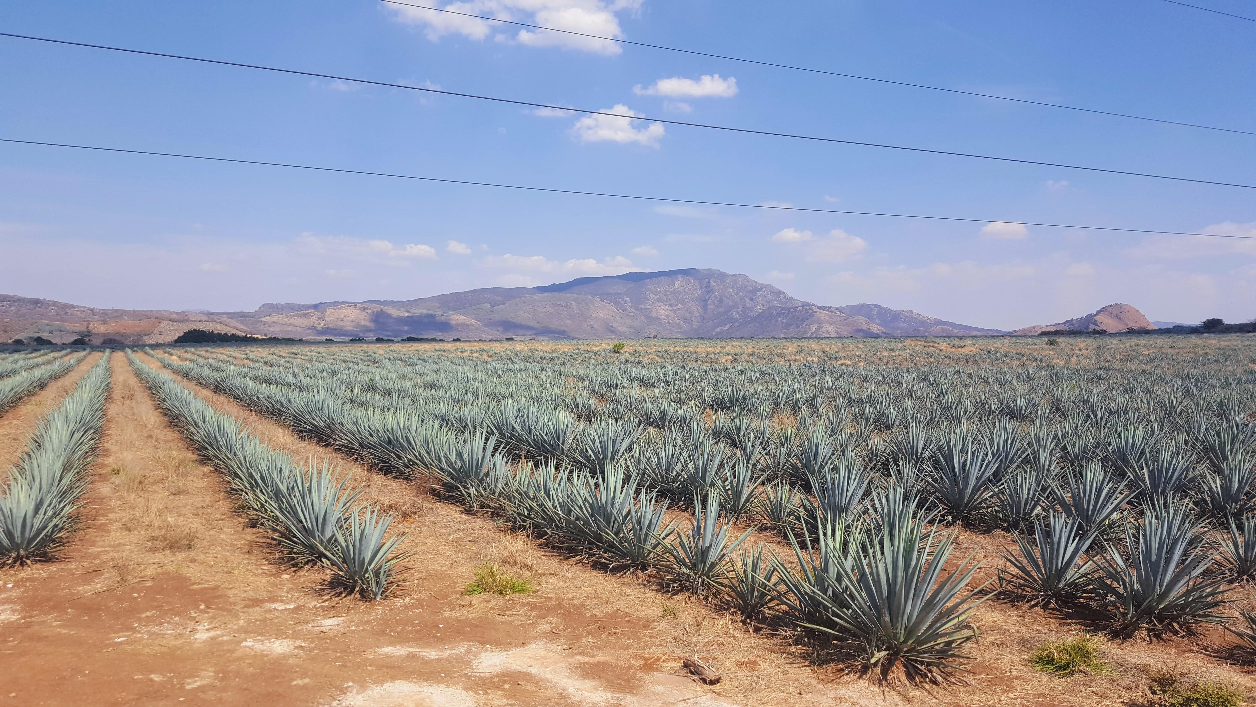 Pyramids, Tequila & Tortas: A Cultural & Culinary Tour