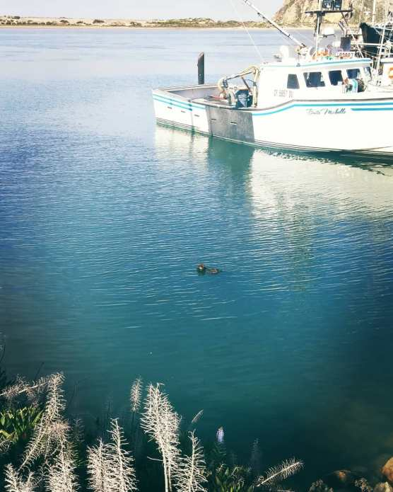 Sea otter spotting!!