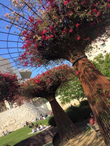 "Bougainvillea ""tree"" planters"